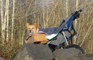 Guido in his Stroller