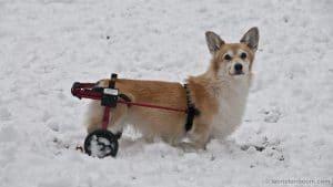 Helen in her cart in the snow.