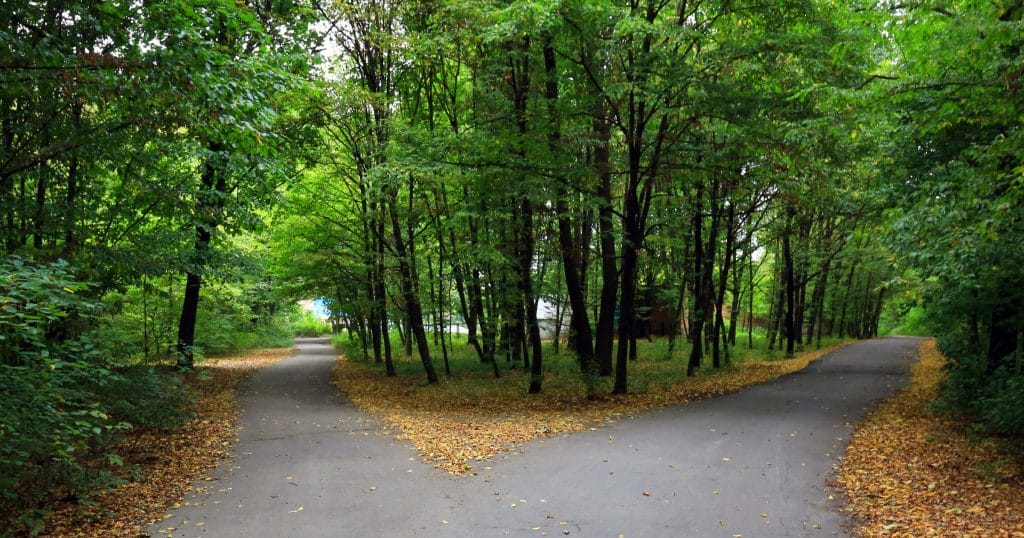 Two Paths Diverge in the Woods